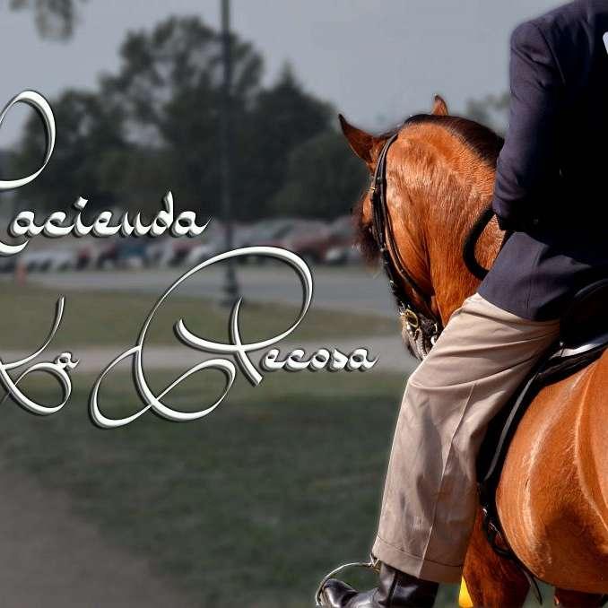 Hacienda la Pecosa Paso Fino Show Horses