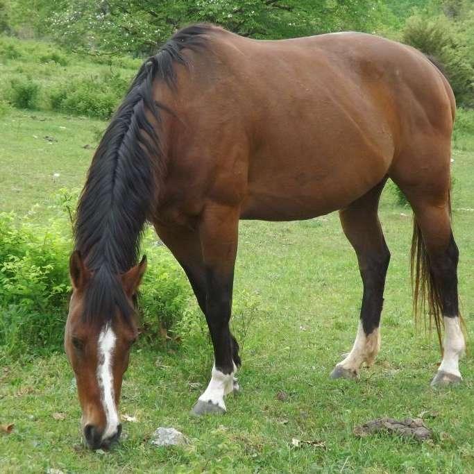 zickmundquarterhorses