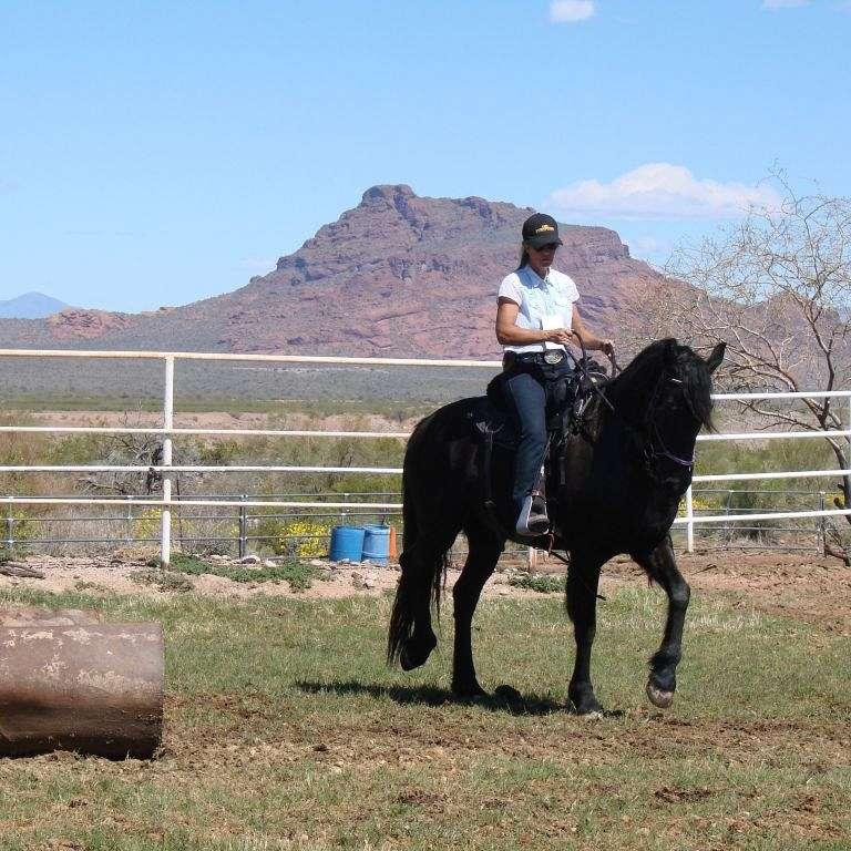 Desert Sky Horse Training