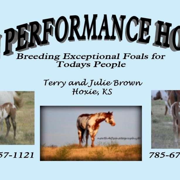TnJ Performance Horses