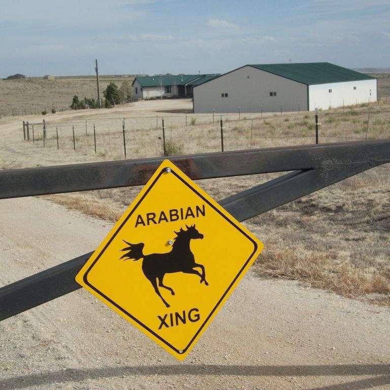 Quintessential Arabians