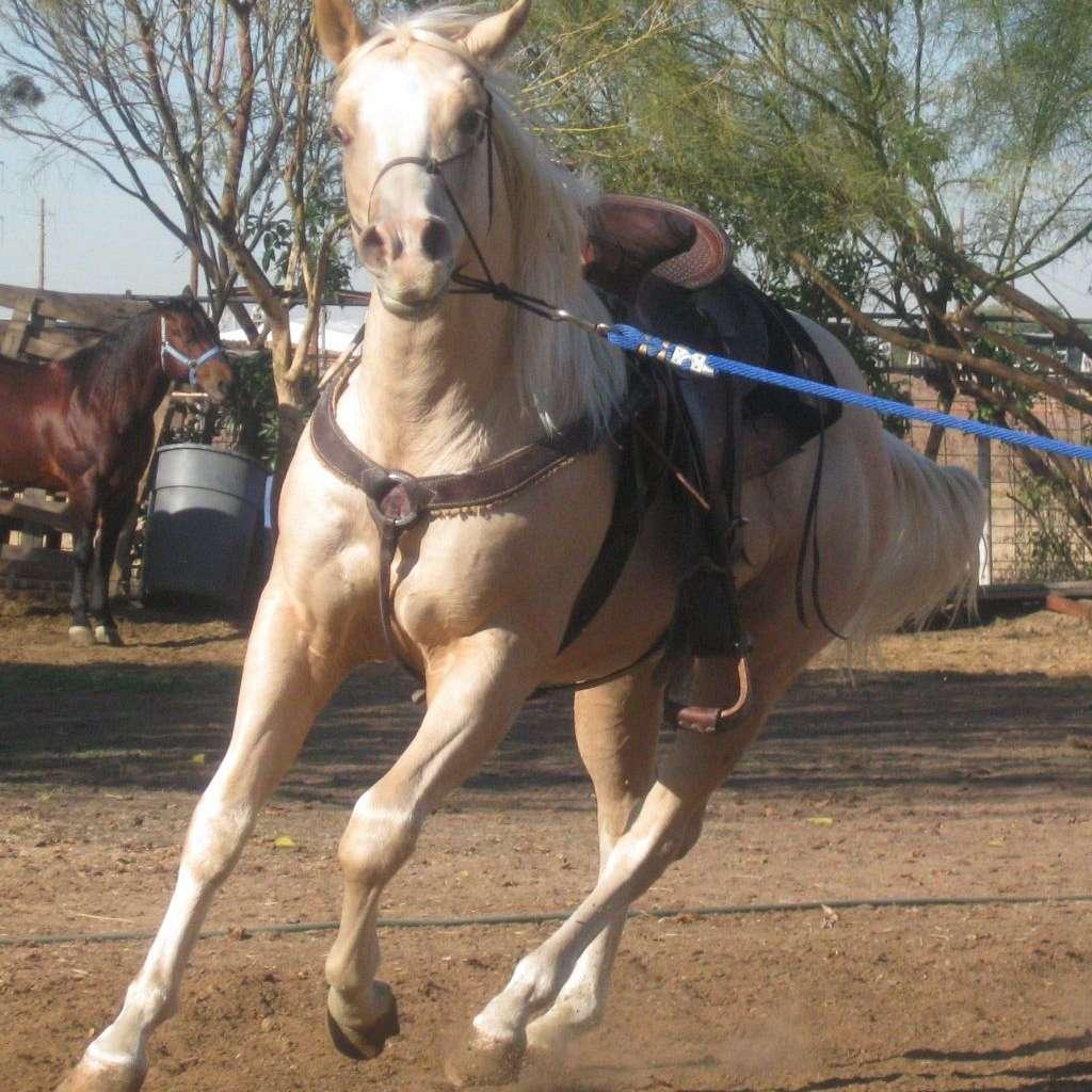 Baca Quarter Horses