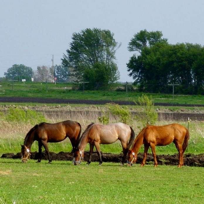 Diamond K Registered Quarter Horses