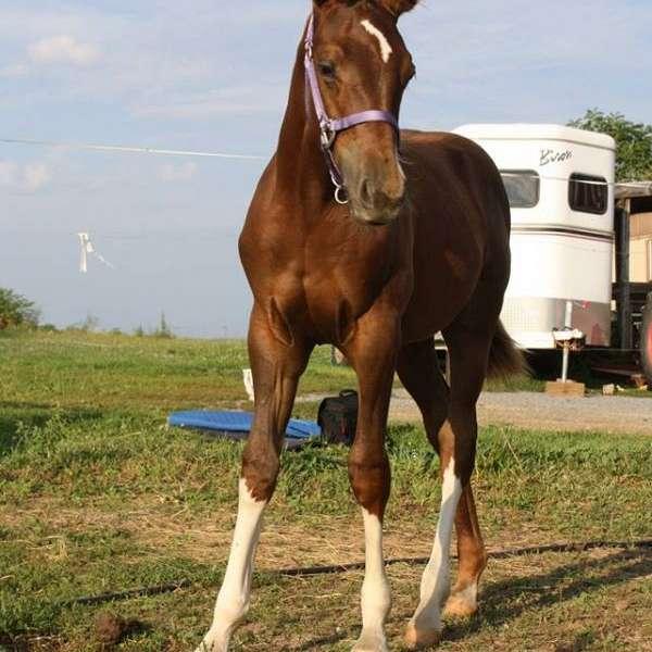 Nittany Equestrian